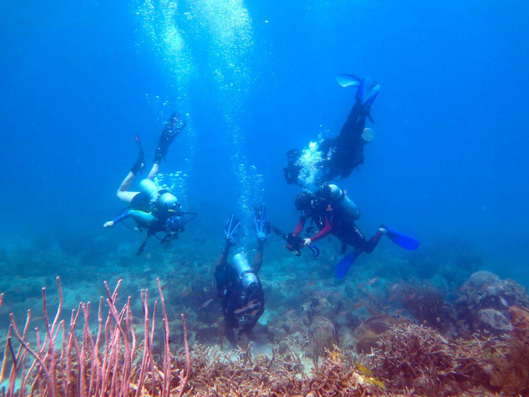 scuba dive on st croix